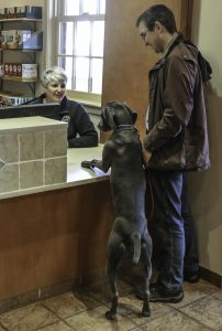 Dog checking into brookfield animal hospital and aaha accredited practice
