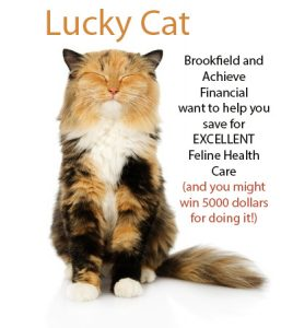 brookfield lucky cat