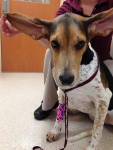 Bella is hoping you'll be 'all ears' for this discussion on ear cleaning!