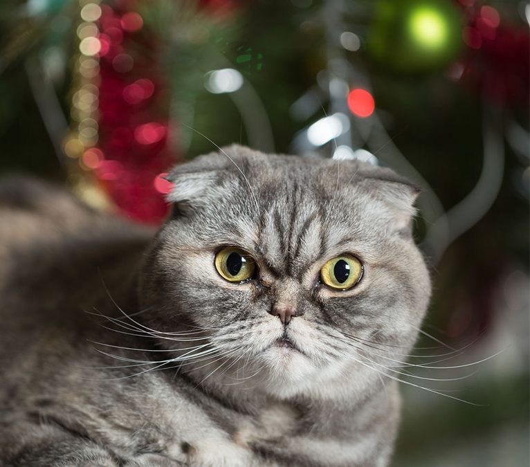 Kill The Christmas Tree: Why cats love tinsel and attacking the 'shiny'