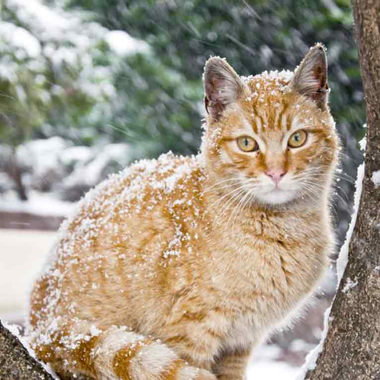 brookfield cat in snow for web