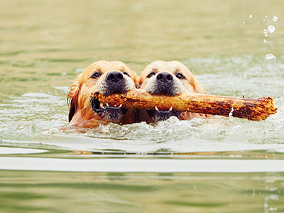 brookfield retrievers with stick for web