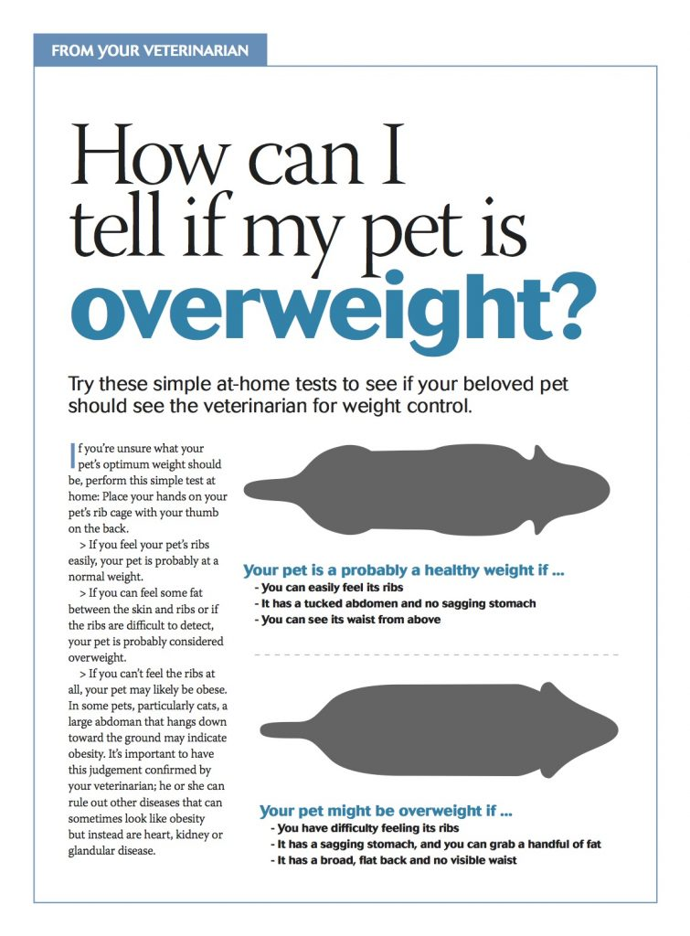 How do I know if my pet is fat?