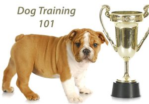 Ten training tips for dog owners