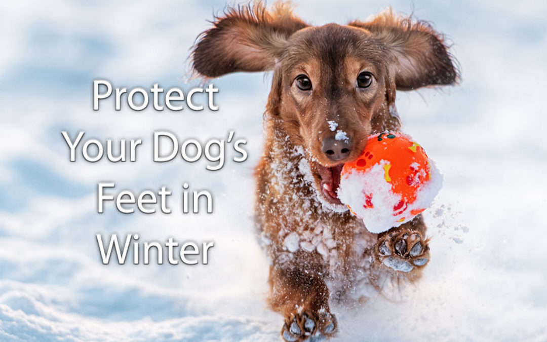 Does Road Salt Hurt My Dog's Feet?
