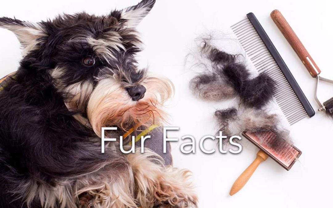 Hair versus Fur and Other Pet Fur Facts