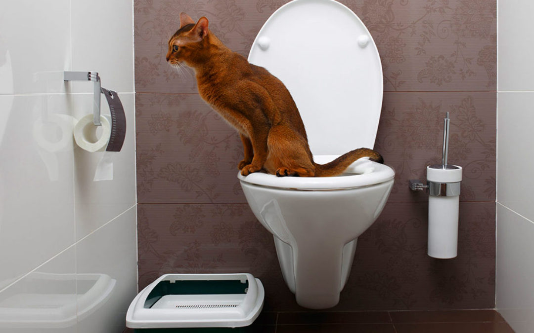 How To Train Your Cat To Use a Human Toilet (and two bonus tricks!)