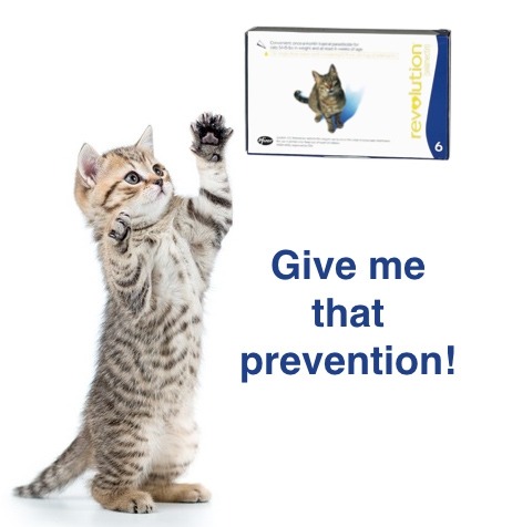 brookfield cat and prevention pic