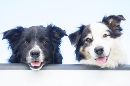 Treat arthritis in senior dogs