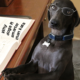 Why Does My Dog Bark At The Mailman?