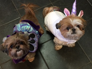 Lucy and Ginger- as a fairy and unicorn