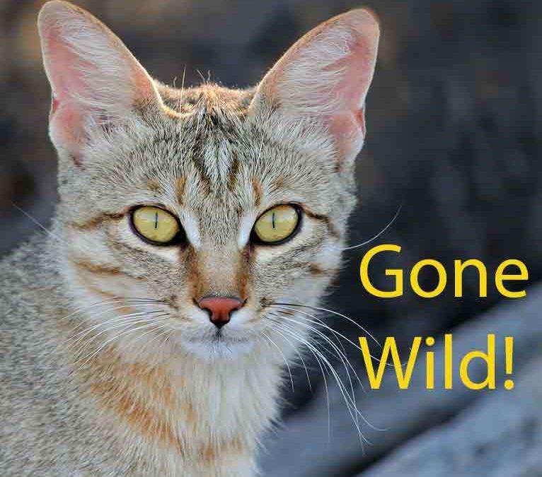 Gone Wild!