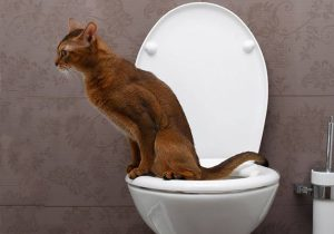 Cats that pee outside of the litterbox may be sick