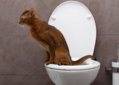 Cat Not Using the Litterbox