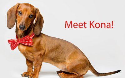 Kona Loves the Individualized, Genuine Care
