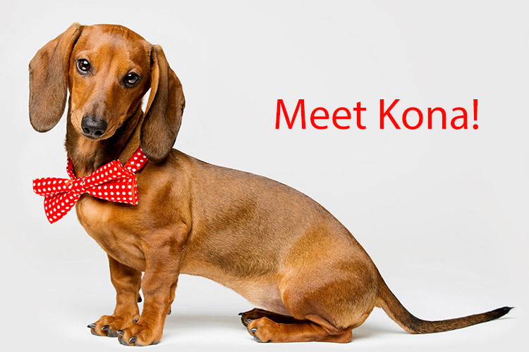 Kona Loves the Individualized, Genuine Care