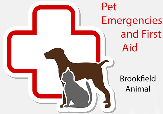 Pet Safety and First Aid