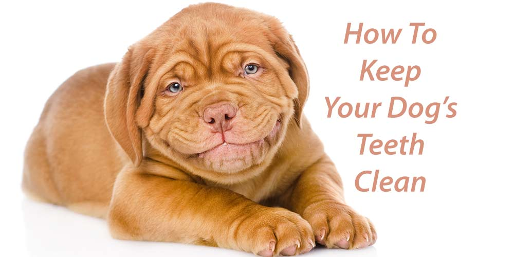 How To Keep Your Dog's Teeth Clean