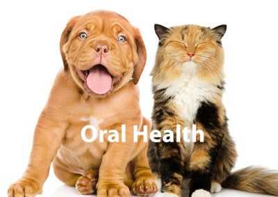 Keep Your Pet's Teeth Clean