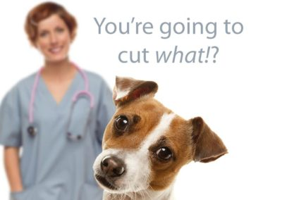 Spay or Neuter Your Dog or Cat