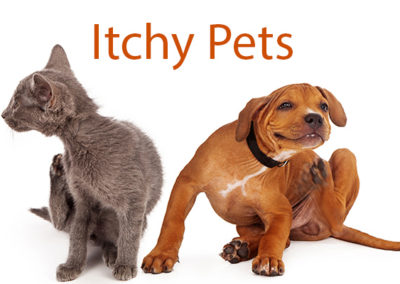 Why Is My Pet So Itchy?