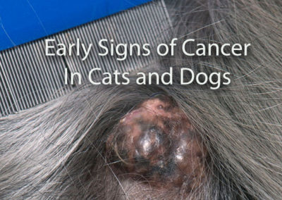 Warning Signs of Cancer in Cats and Dogs