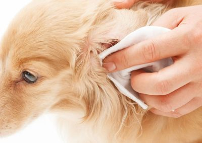 How To Clean My Pet's Ears