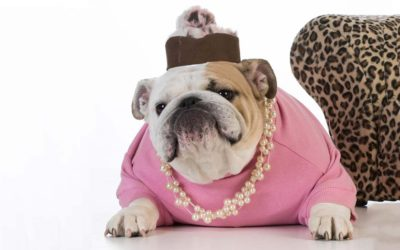 Pet Clothes: Our Top Picks for Witty, Wonderful, or Just Plain Weird