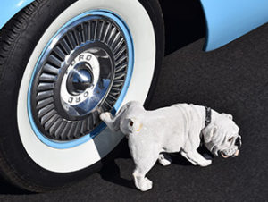 dog peeing on tire for Brookfield Animal Hospital and pet travel