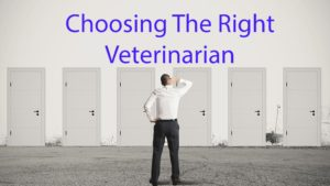 man trying to decide which veterinarian to go to in Brookfield, Connecticut