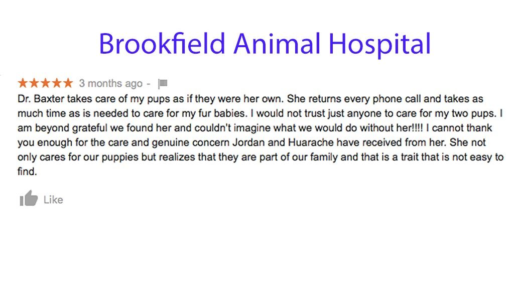 5 star review for brookfield animal hospital