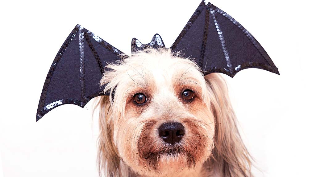 Matching Halloween Outfits for Pets and People