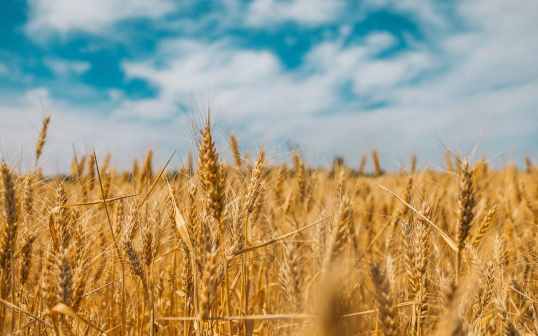 The Grain Free Risk