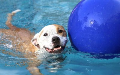 Do's and Don'ts of Swimming With Your Dog